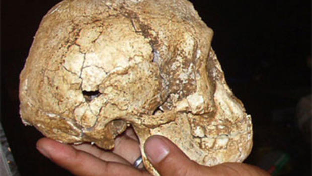 fossil records of modern humans found in Indonesia